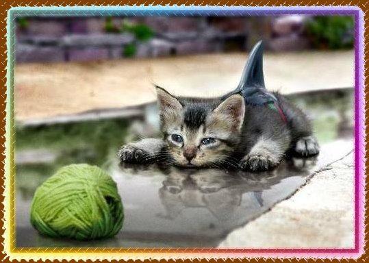 Chaton rigolo lol - Photo de chaton rigolo ...